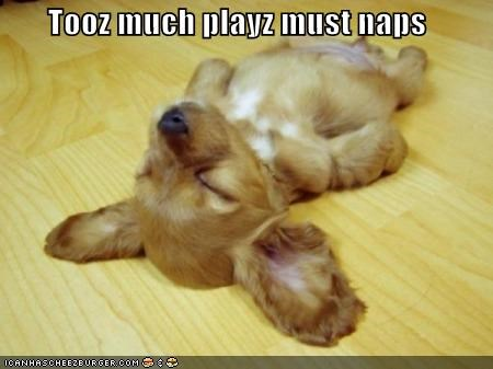 Tooz much playz must naps