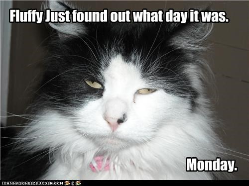 caption,captioned,cat,day,discovered,discovery,do not want,finding out,Fluffy,found out,Hall of Fame,monday,upset