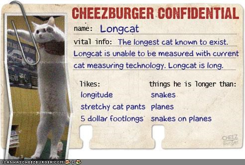 Cheezburger Confidential Presents: Longcat
