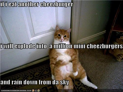 if i eat another cheezburger i will explode into  a million mini cheezburgers and rain down from da sky
