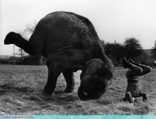 acting like animals,aspirations,aspiring,dialect,dreaming,dreams,elephant,gymnast,headstand,pachyderm,purpose,trying