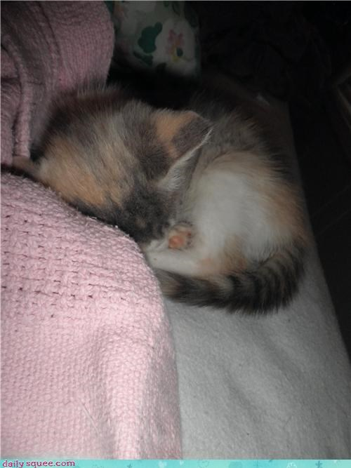 asleep,cat,itty bitty,kitten,kitty,reader squees,rescue,rescued,sleeping