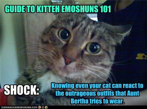 GUIDE TO KITTEH EMOSHUNS 101