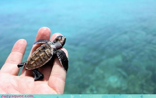 Squee Spree: Sea Turtles Vs. Jellyfish!