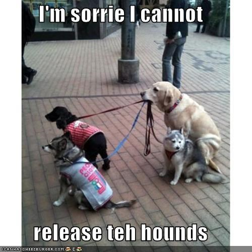 I'm sorrie I cannot   release teh hounds