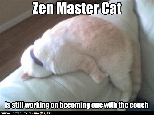 becoming,best of the week,bonding,caption,captioned,cat,couch,Hall of Fame,one,oneness,working,zen,zen master