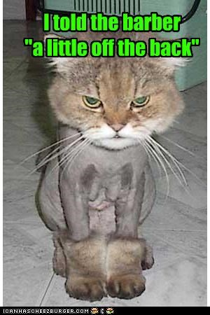 """I told the barber  """"a little off the back"""""""