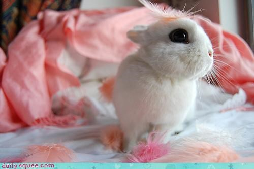 Bunday,bunny,decorating,decorations,happy,happy bunday,rabbit,style