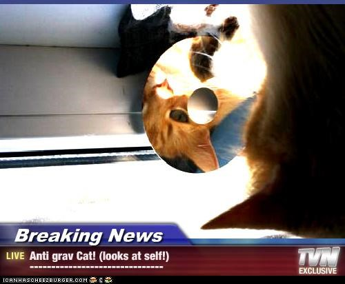 Breaking News - Anti grav Cat! (looks at self!) -------------------------------
