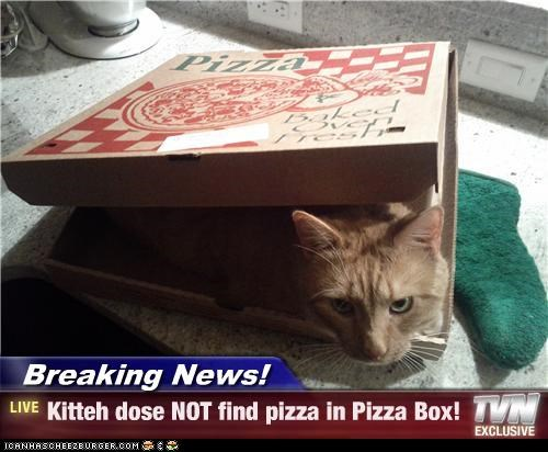 Breaking News! - Kitteh dose NOT find pizza in Pizza Box!