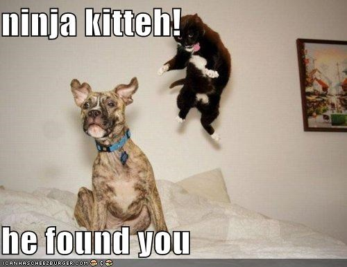 ninja kitteh!  he found you