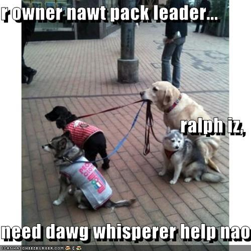 r owner nawt pack leader... ralph iz, need dawg whisperer help nao