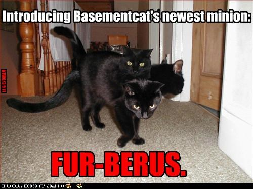 basement cat,caption,captioned,cat,Cats,cerberus,fur,introducing,minion,newest,pun