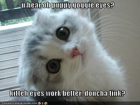 u hear ob puppy goggie eyes?  kitteh eyes work better. doncha tink?