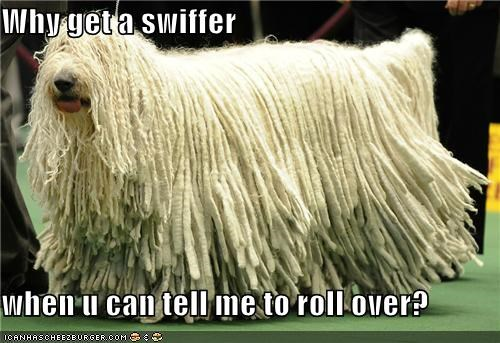 Why get a swiffer  when u can tell me to roll over?