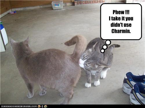 Phew !!! I take it you didn't use Charmin.