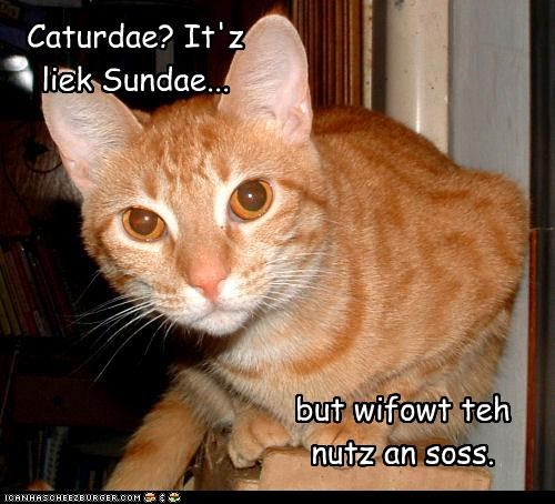 caption,captioned,cat,Caturday,homophone,like,nuts,pun,sauce,sundae,tabby,toppings,without