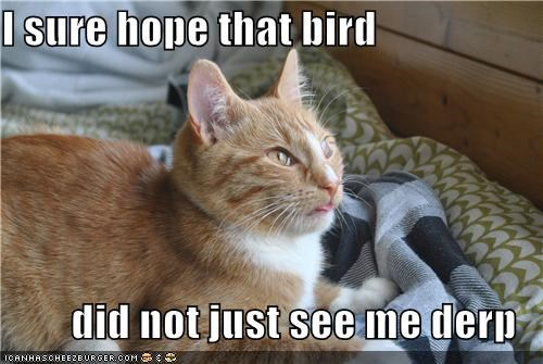 I sure hope that bird  did not just see me derp