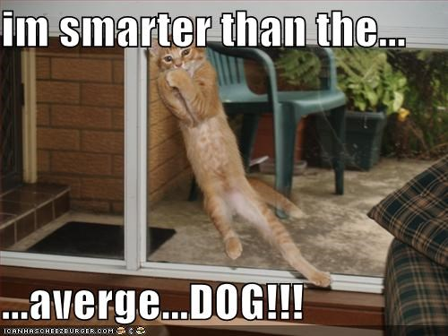 im smarter than the...  ...averge...DOG!!!