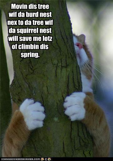 bird,caption,captioned,cat,moving,nest,plans,spring,squirrel,tree
