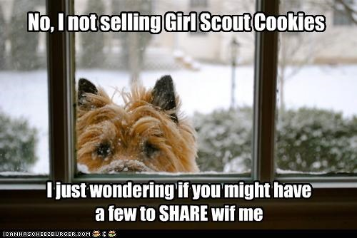 No, I not selling Girl Scout Cookies