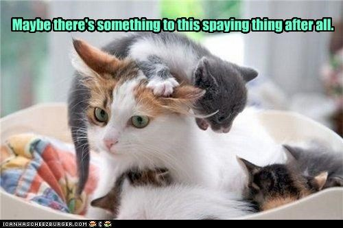 Maybe there's something to this spaying thing after all.