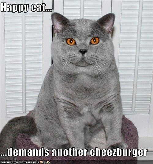 Happy cat...  ...demands another cheezburger