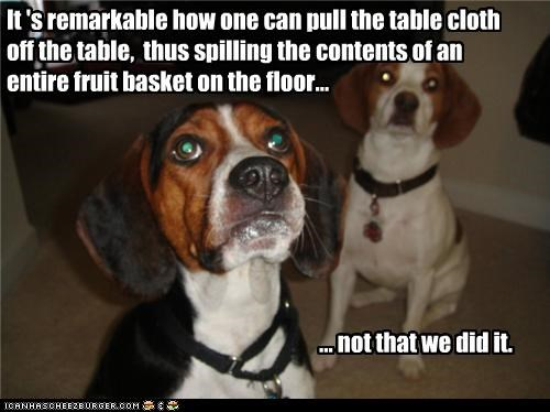 It 's remarkable how one can pull the table cloth off the table,  thus spilling the contents of an entire fruit basket on the floor...