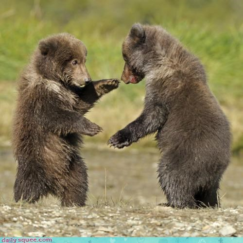 acting like animals,backgammon,bear,bears,cub,cubs,fighting,playing,sparring,suggestion,talking smack,tough