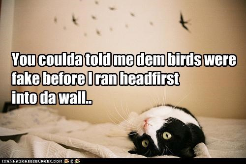 You coulda told me dem birds were fake before I ran headfirst  into da wall..