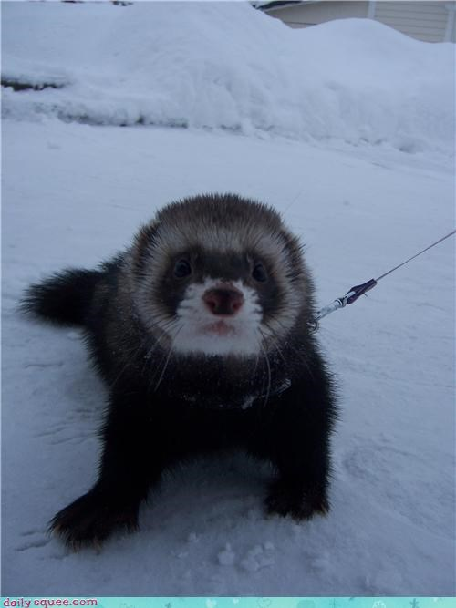 alliteration,do want,ferret,Finland,finnish,fuzzy