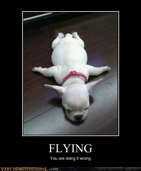 dogs,flying,tired,wrong