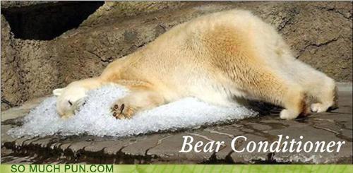 air,air conditioner,bear,conditioner,ice,polar bear,rhyme,rhyming