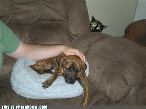Cats,Caturday,dogs,ominous,photobomb