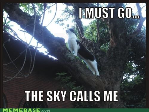 it calls to me,kitty,the sky