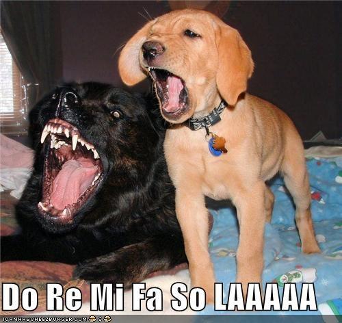 do,fa,LA,labrador,mi,puppy,re,scale,singing,sol,whatbreed