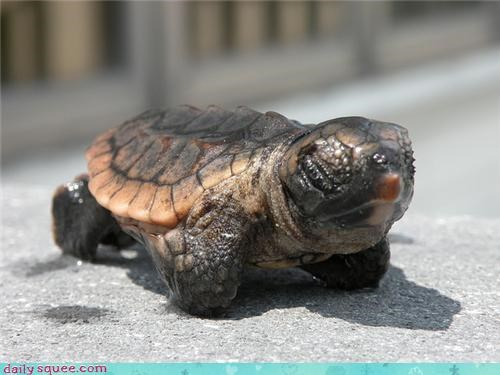 activated,baby,caveat,exception,mode,rule,sea turtle,squee spree,tank