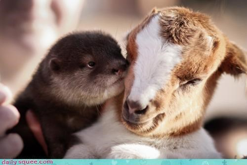 Interspecies Love is Otterly Adorable!