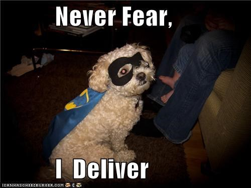 cape,costume,deliver,dressed up,fear,mask,never,never fear,poodle,worry not