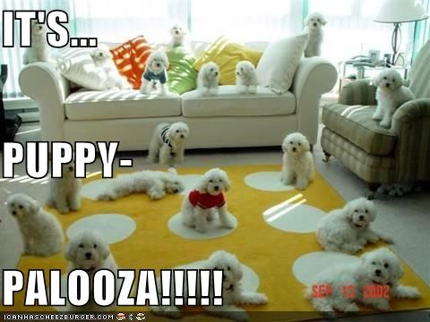 IT'S... PUPPY- PALOOZA!!!!!