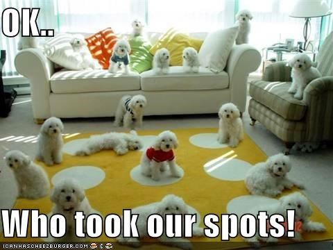 OK..  Who took our spots!