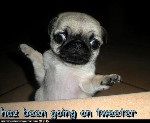 haz been going on tweeter