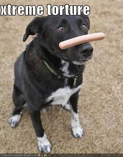 balancing,border collie,cruel,do want,extreme,hotdog,nose,torture
