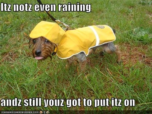 coat,do not want,dressed up,jacket,not,rain,raincoat,raining,Sad,yorkshire terrier