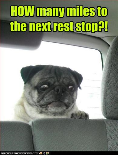 bathroom,how,many,miles,need to go,next,pug,question,rest stop,scared,surprised,upset
