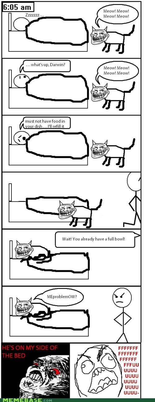 Morning Cat-Trolling