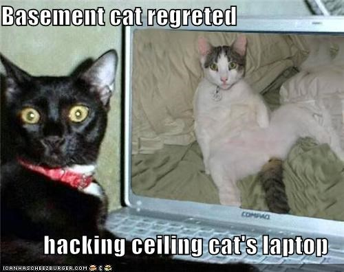 Basement cat regreted  hacking ceiling cat's laptop