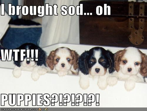 I brought sod... oh WTF!!! PUPPIES?!?!?!?!