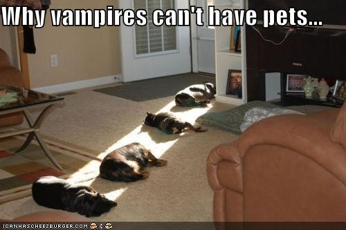 Why vampires can't have pets...