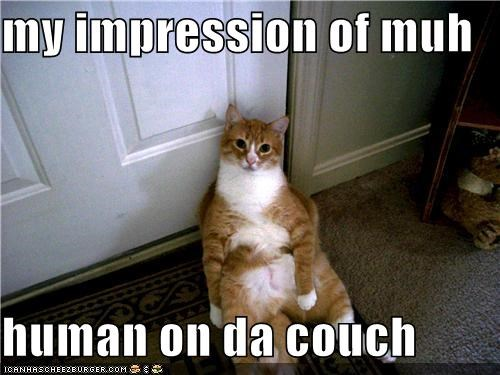 my impression of muh  human on da couch